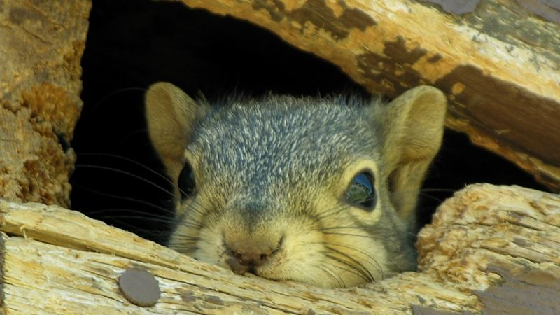 10 Best Guide How To Get Rid Of The Squirrel In The Attic