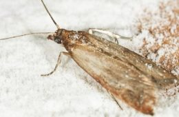 10 Ways How to Get Rid of Pantry Moths