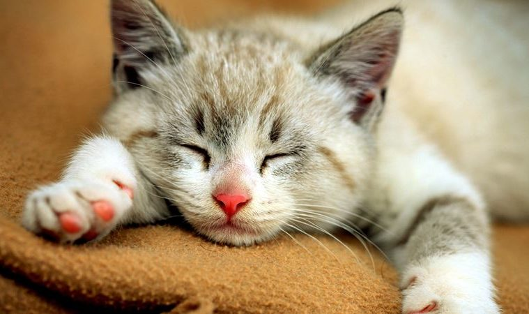 15 Effective Ways How to Get Rid of Worms in Cats