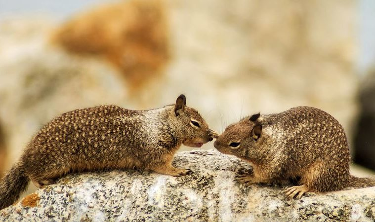 5 Most Humane Ways on How to Get Rid of Ground Squirrels