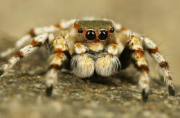How to Get Rid of Spiders in House