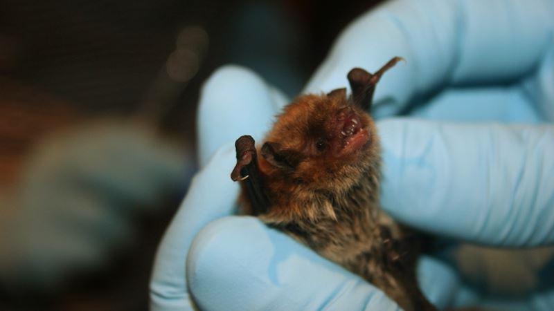 Como se livrar dos morcegos
