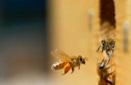 How Do You Get Rid of Carpenter Bees
