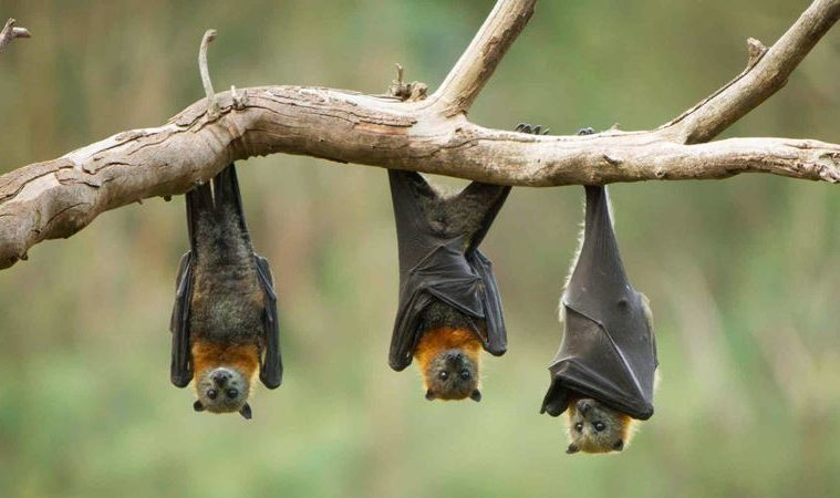 20 Useful Methods On How To Get Rid Of Bats Igetrid