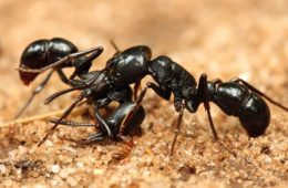 how to get rids of ants in the kitchen